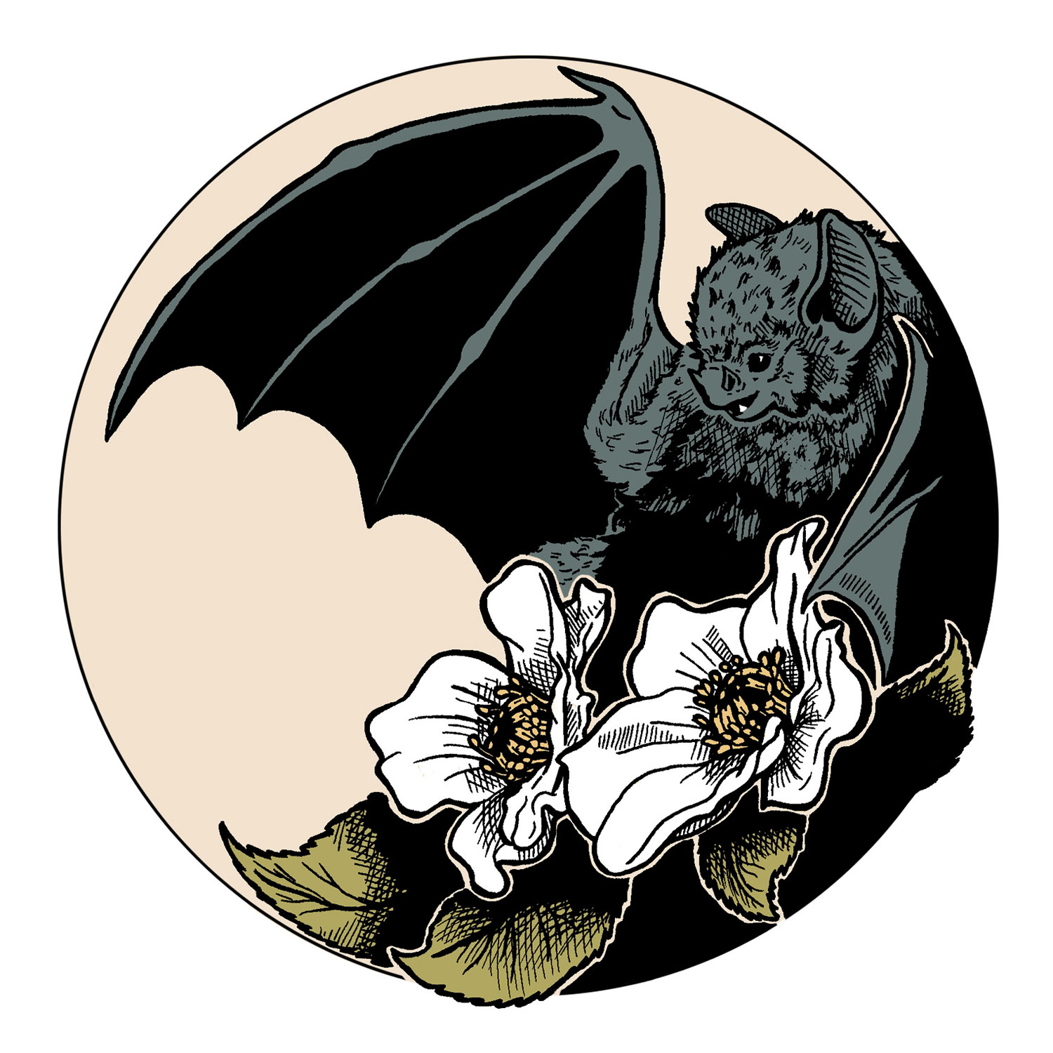 illustration bat by moy-a illustration and graphic design